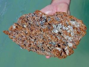 worm rock