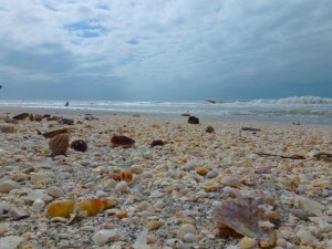 Captiva seashells october 2011