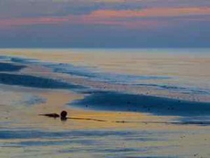 beached bouy at sunrise sanibel