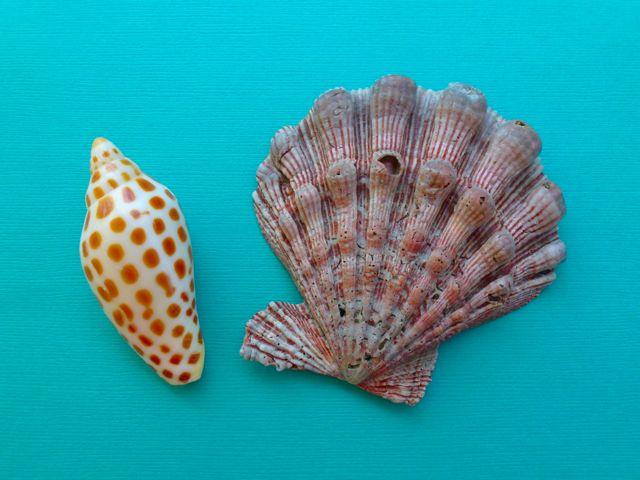 Seashells On Cloud Nine