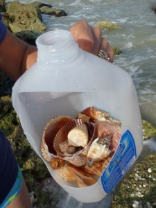 michelle's shell jug