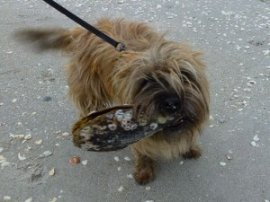puppy with pen shell seashell