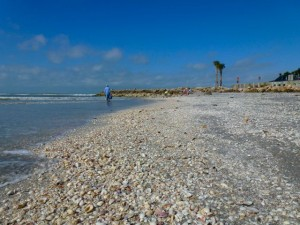 Captiva florida shell beach
