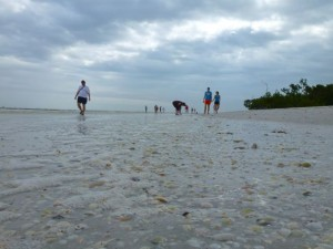 Sanibel shelling
