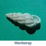 Wentletrap ID