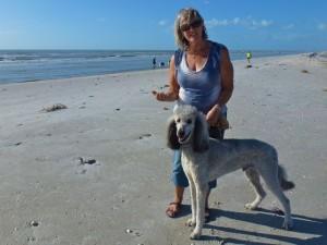 alexander standard poodle lynn beach