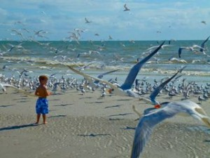 boy with gulls