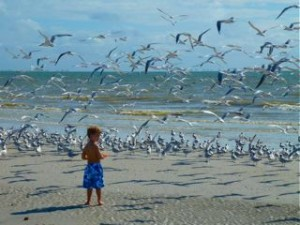 child on sanibel beach with birds