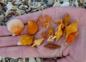 lisbeth orange seashells