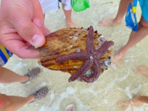 live starfish with people gathered