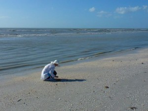 low tide shell collecting