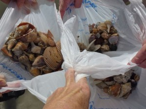 sanibel seashell bags