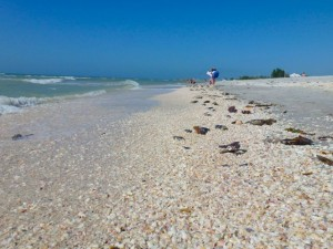 seashells on beach Sanibel