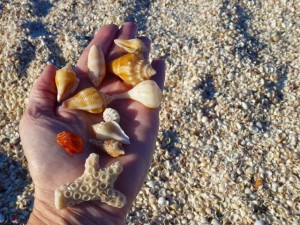 Collecting captiva seashells
