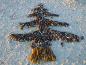 Seashell Christmas tree beach