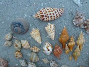 donnie seashells lighthouse beach
