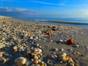 seashells on Captiva i love shelling