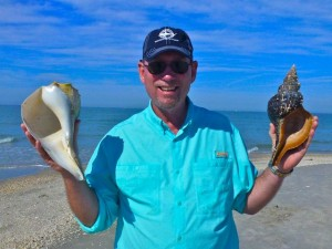 Clark 13 inch whelk horse conch knobless wonder
