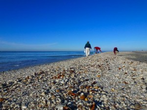 Sanibel shell beach