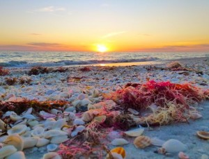 Sanibel sunset red drift algae