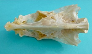 bird fish skull bottom