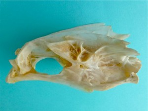 iLoveShelling fish but looks like a bird skull