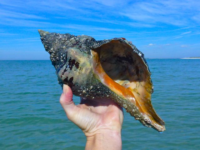 2012 New Year Brings BIG Shells!