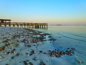 seashells by sanibel fishing pier