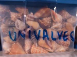 univalve box