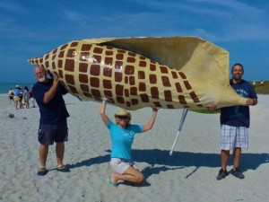 biggest sanibel junonia