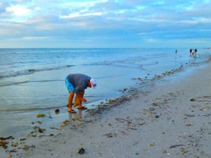 collecting shells Sanibel island