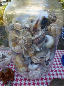 jar of seashells lucienne ron