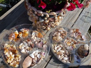 organizing seashell trays