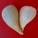 paper fig valentine