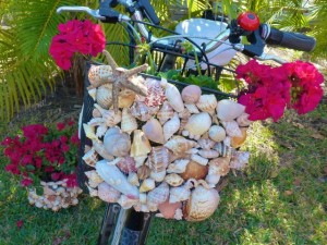 seashell bicycle basket