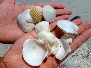 alicia seashells sanibel