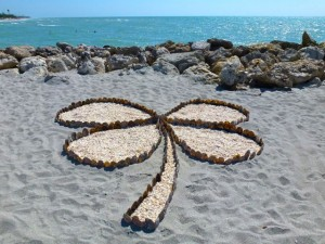 four leaf clover seashells beach
