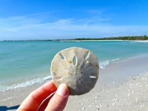 sand dollar bonita florida