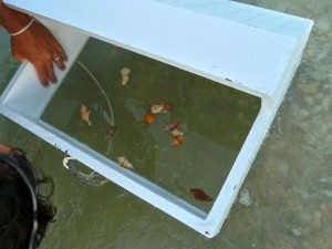 seashell viewing box