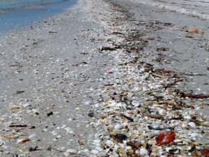 seashell wrack line