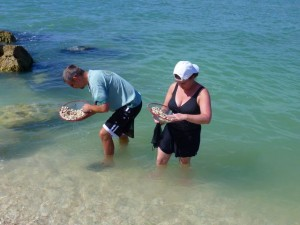 shelling captiva florida