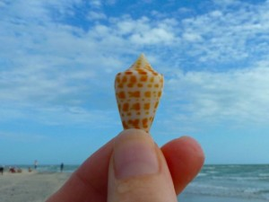 baby alphabet cone sanibel bp