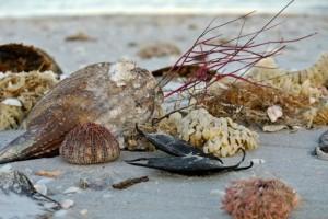 beach bling flotsam jetsam