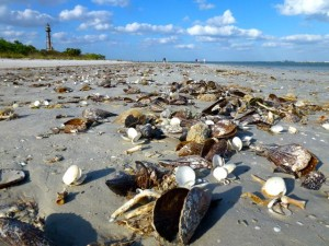 beach bling flotsam sanibel gulf