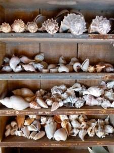 capt brian seashells