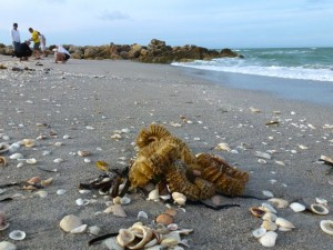 captiva bp egg case