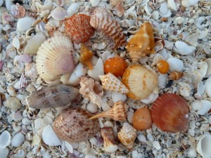 collecting seashells bp