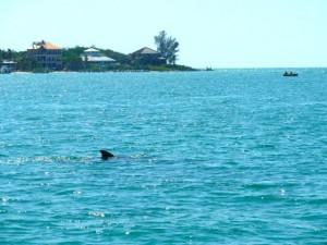 dolphin captiva cruises boat