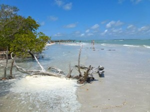 foamy lighthouse beach sanibel