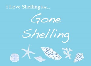 gone shelling i love shelling